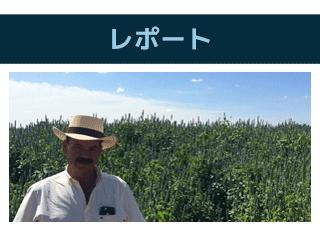 2015_mex_report